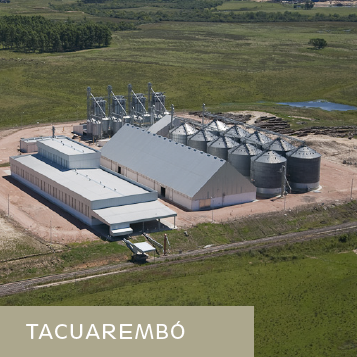 TacuaremboMiniatura